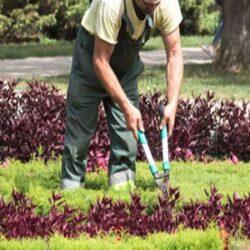 Kadıköy Bahçıvan İş İlanı